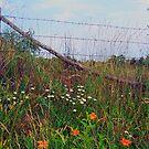 WV fence by Sandra Hopko