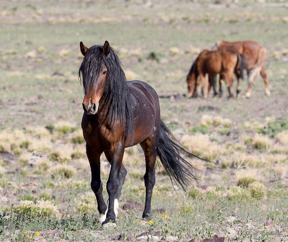Sizing up the Threat by NorthernDesert