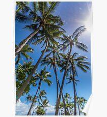 Port Douglas palms Poster