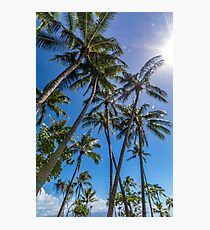 Port Douglas palms Photographic Print