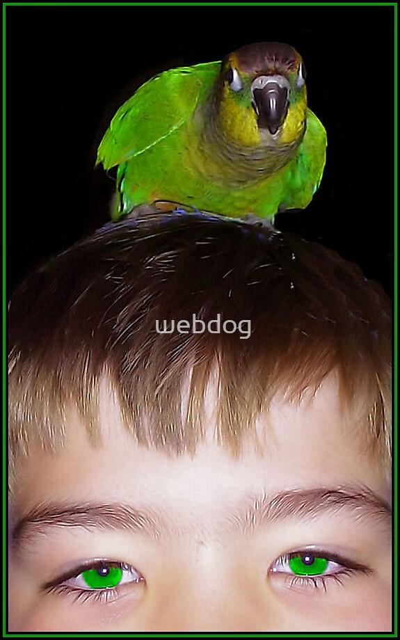 BIRD BRAIN by webdog
