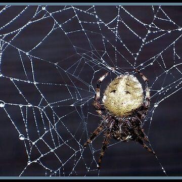 WICKED WEB by webdog