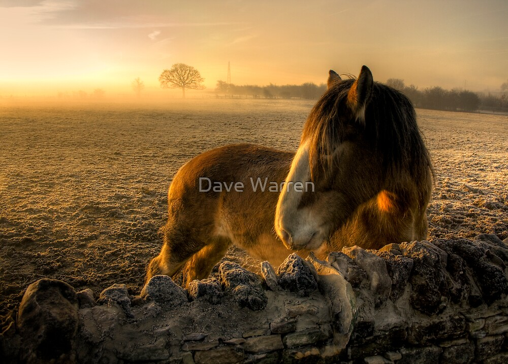 Sunrise Over Inquisitive Eyes by Dave Warren
