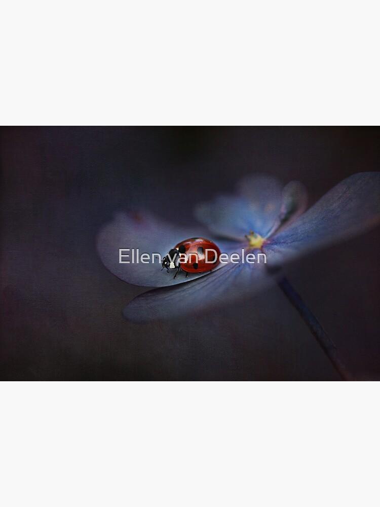 Ladybird.... by Ellen