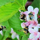 Popular with the bumbles by missmoneypenny