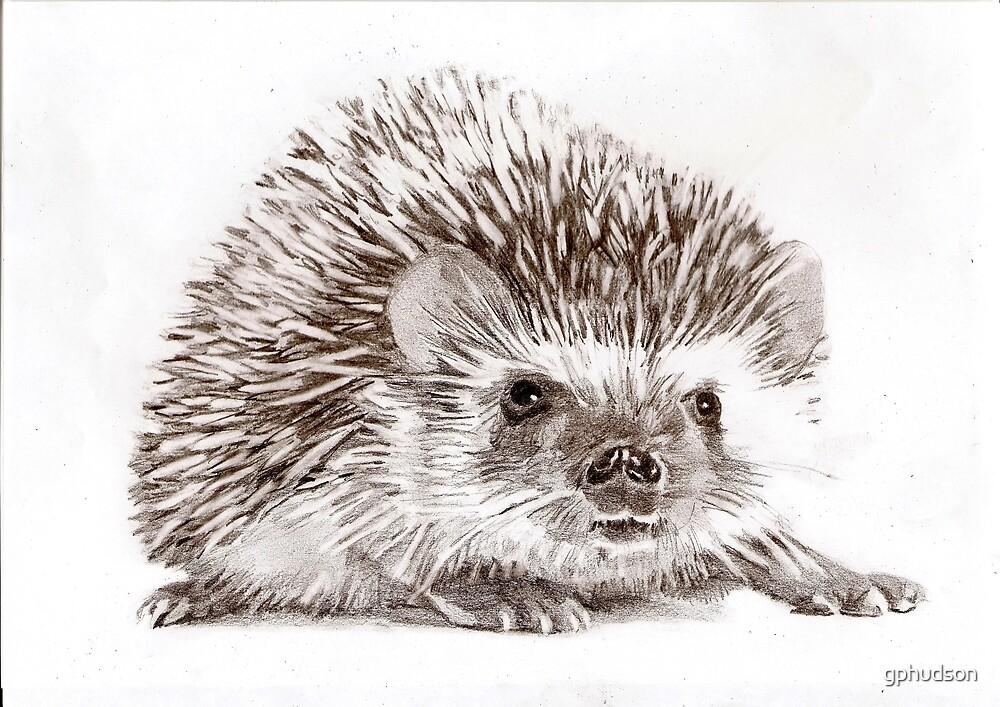 Hedgehog by gphudson
