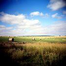 Hay Bales by Diane