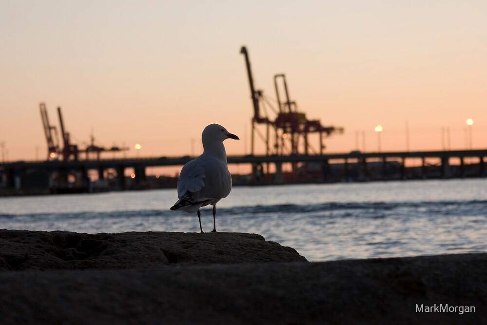 Night Gull by MarkMorgan