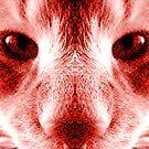 Kitty by Shane Huckaby