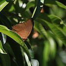 Butterfly by richeriley
