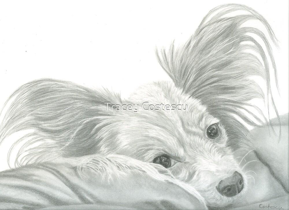 Papillon Puppy Portrait in Graphite by Tracey Costescu