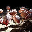 Flamingo Siesta by WildestArt