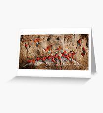 Carmine Bee-eaters Greeting Card