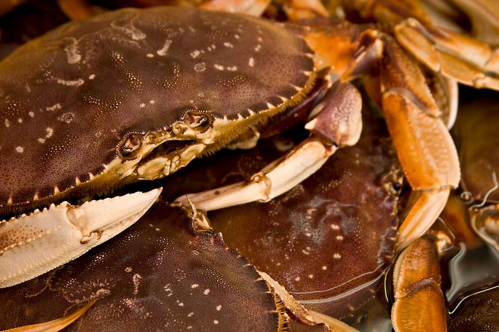 Crabby Eyes by John Heil