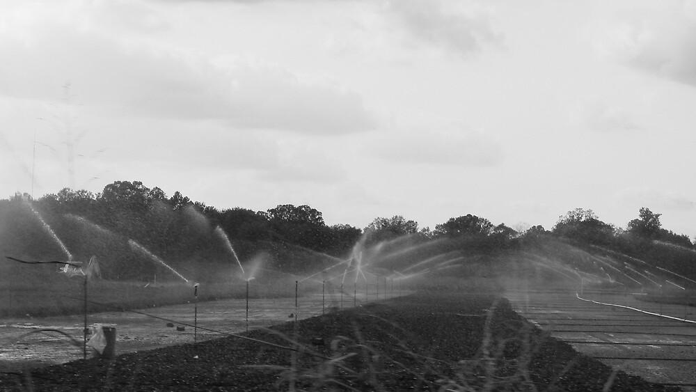 Water Sprinklers by rissalin