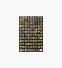2017 Spring Arizona Wildflowers Art Board