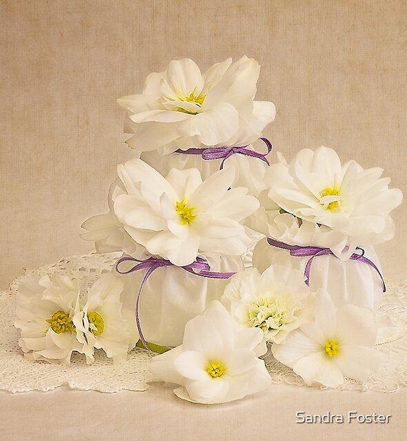 Little Pots Of Purity  by Sandra Foster
