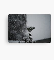 Snow Holly Canvas Print