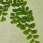 Maiden Hair Fern With Shadows by Sandra Foster