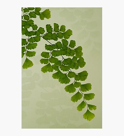 Maiden Hair Fern With Shadows Photographic Print