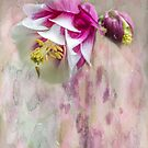 Columbine Blossom in Magenta and White #2 by MotherNature2