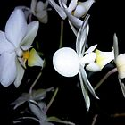 WHITE ORCHIDS AT NIGHT by WhiteDove Studio kj gordon