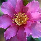 Pretty Pink Flower by Kimberly Johnson