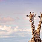 Giraffes in the Sky by vividpeach