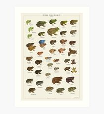 Frogs & Toads of Europe Art Print