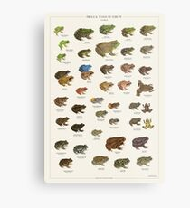 Frogs & Toads of Europe Metal Print