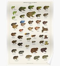 Frogs & Toads of Europe Poster