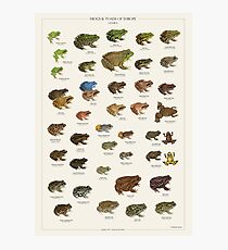 Frogs & Toads of Europe Photographic Print