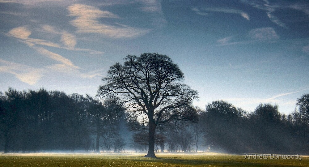Backlit Tree by Andrew Dunwoody