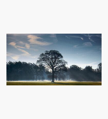 Backlit Tree Photographic Print