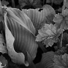 Green Leaves in Black and White #2 by Anthony DiMichele