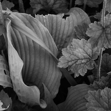 Green Leaves in Black and White #2 by antoniozart