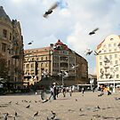 Plenty of birds at the Hotel Timisoara by ellismorleyphto