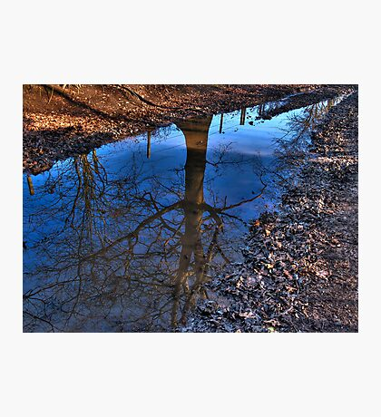 Tree Puddle Photographic Print