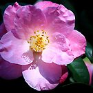 Bright Pink  by Kimberly Johnson