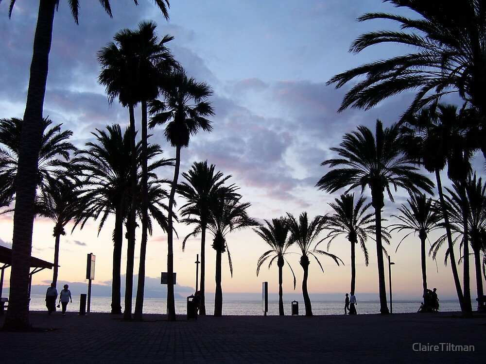 Palm tree sunset by ClaireTiltman