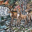deers in birch creek falls by LoreLeft27