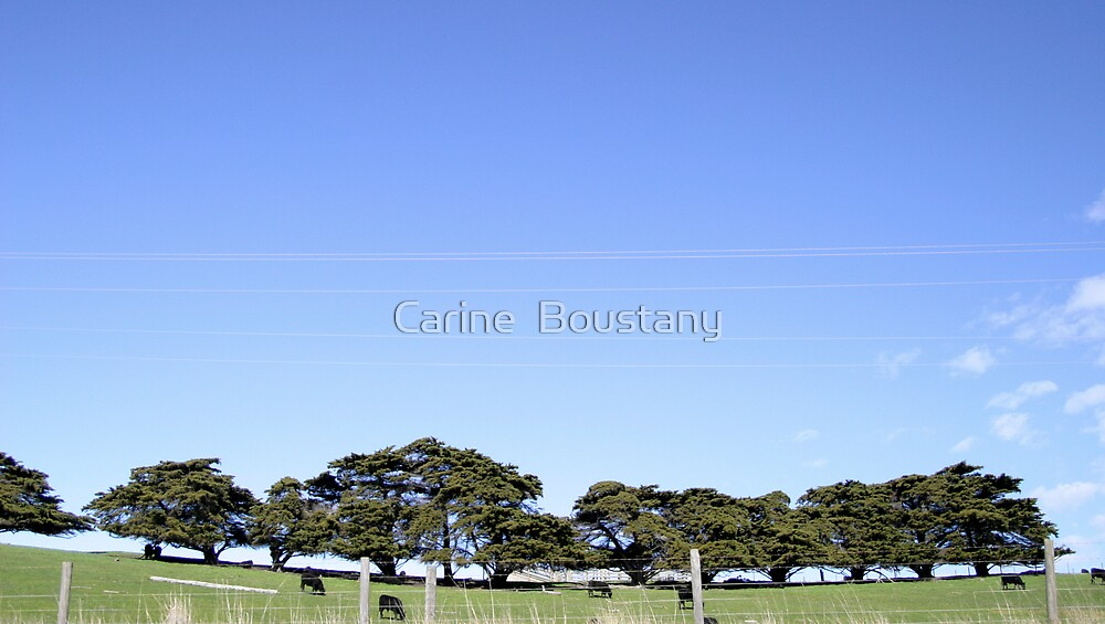 Phillip Island by Carine  Boustany