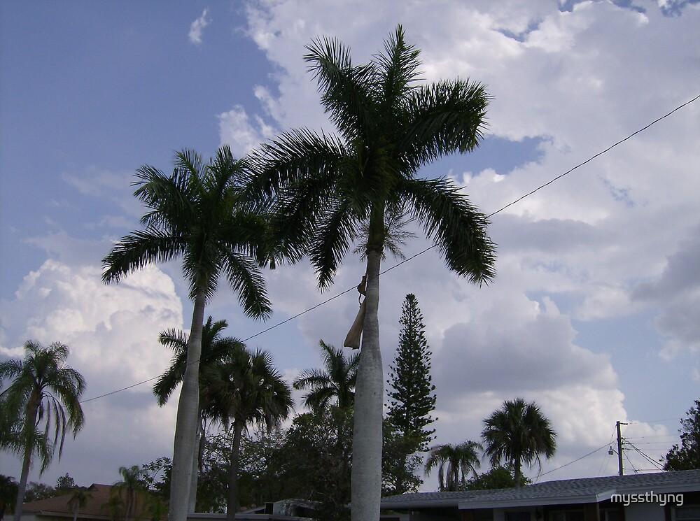 Royal Palms  by myssthyng