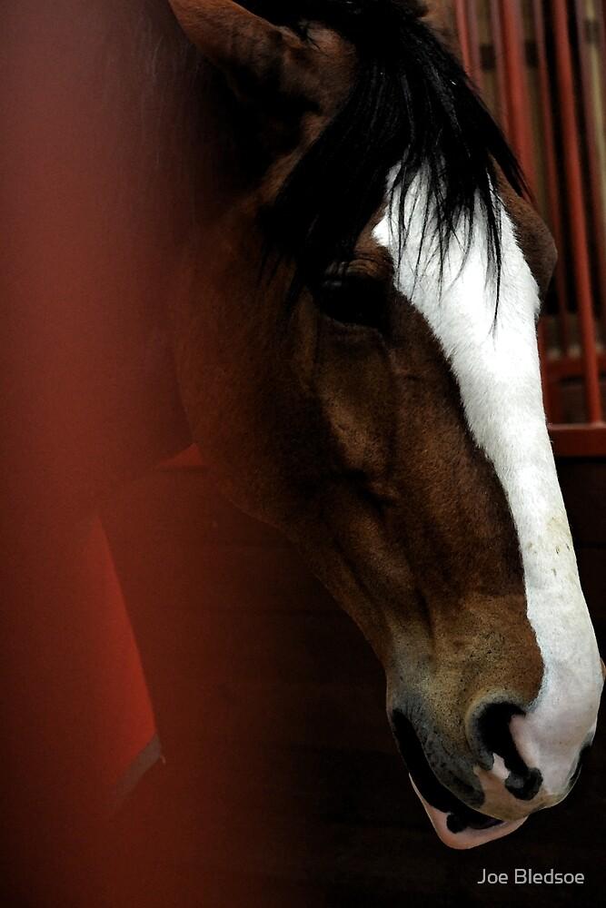King of Equines by Joe Bledsoe