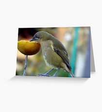 Slurping the Fruity Cocktail! - Bellbird - New Zealand Greeting Card