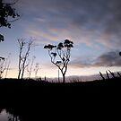 Just Before Sunrise by EzekielR