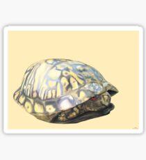 Box Turtle Sticker