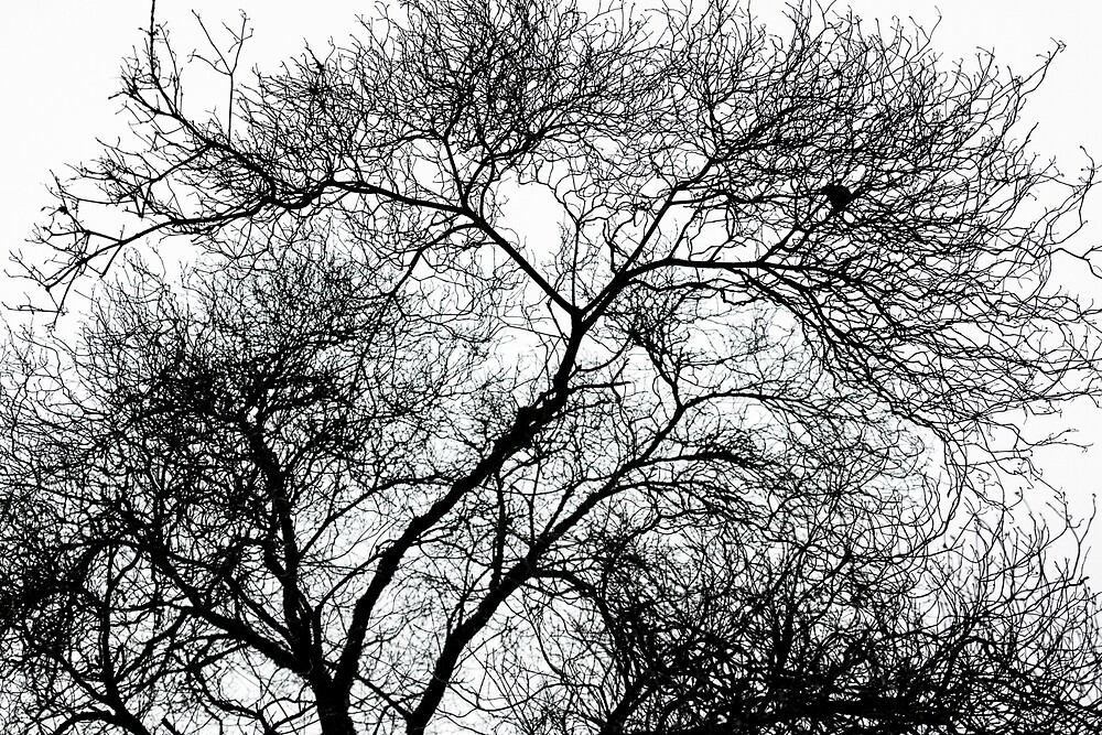 Branches Silhouetted Against the Sky by journeysincolor