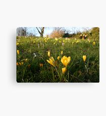 Park lawns infested Canvas Print