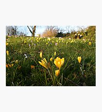 Park lawns infested Photographic Print
